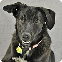 Adopt A Pet :: Billie Jean - Brooklyn, NY