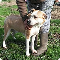 Adopt A Pet :: Ridley - North, VA