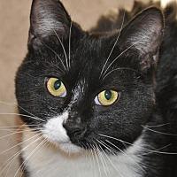 Adopt A Pet :: Gypsie - Wagoner, OK