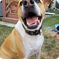 Adopt A Pet :: Benji - Acushnet, MA