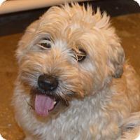 Adopt A Pet :: Phoebe - Prole, IA