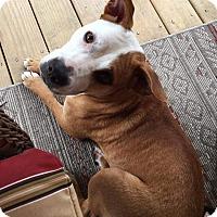 Adopt A Pet :: Madeline (Maddie) - Woodstock, GA