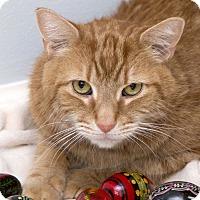 Adopt A Pet :: Carlos - Bristol, CT