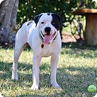 Adopt A Pet :: Jackson - Ft. Myers, FL
