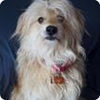 Adopt A Pet :: Jaden - Canyon Country, CA