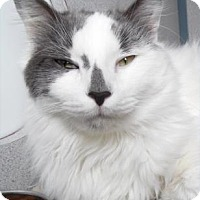Adopt A Pet :: fletch - Waupaca, WI