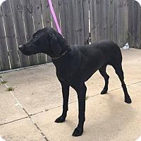 Adopt A Pet :: Joey - Garden City, MI