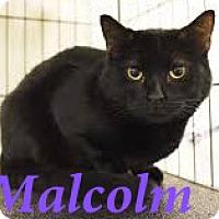 Adopt A Pet :: Malcolm - El Cajon, CA