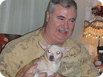 Chihuahua Mix Dog for adoption in Seattle, Washington - Charlie