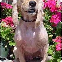 Adopt A Pet :: Cash - Sugarland, TX