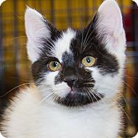 Adopt A Pet :: Eliza - Irvine, CA