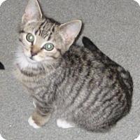 Adopt A Pet :: Precious - Kirkwood, DE