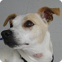 Adopt A Pet :: Taylor - Erwin, TN