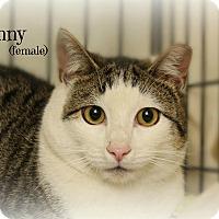 Adopt A Pet :: Bunny - Glen Mills, PA