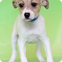 Adopt A Pet :: Elroy - Waldorf, MD
