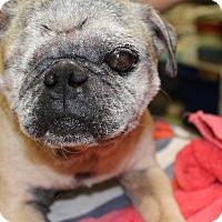 Adopt A Pet :: Leon - Gardena, CA