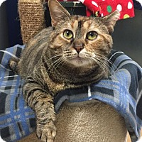 Adopt A Pet :: Alaskah - Northbrook, IL