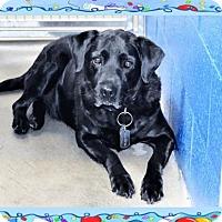Adopt A Pet :: Mojo - San Jacinto, CA
