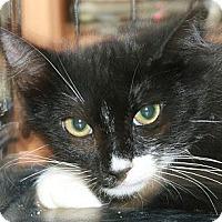 Adopt A Pet :: Rollo - Canoga Park, CA