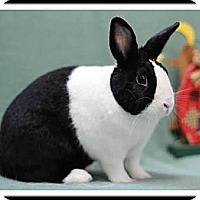 Adopt A Pet :: Dimitria - Williston, FL