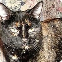 Adopt A Pet :: Zoe - Orillia, ON