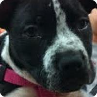 Adopt A Pet :: Cookie - Modesto, CA