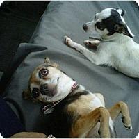 Adopt A Pet :: Abbey & Nicky - Rancho Cordova, CA