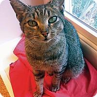 Adopt A Pet :: Pixie - Pittstown, NJ