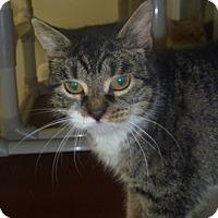 Adopt A Pet :: Thea - Hamburg, NY