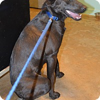 Adopt A Pet :: Bear Lee - Prole, IA