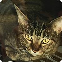 Adopt A Pet :: Sheena - Boca Raton, FL