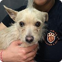 Adopt A Pet :: Wilbur - Coppell, TX