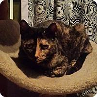 Adopt A Pet :: Mocha - Chelsea - Kalamazoo, MI