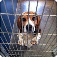 Adopt A Pet :: Beaumont - Phoenix, AZ