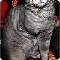 Adopt A Pet :: Floyd - Alexandria, VA