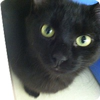 Adopt A Pet :: Sam - Riverhead, NY