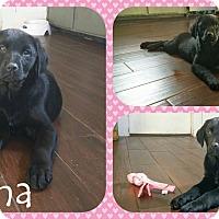 Adopt A Pet :: Fauna - DOVER, OH