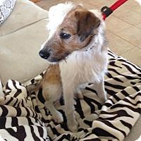 Adopt A Pet :: Jethro in Seguin/San Antonio - San Antonio, TX
