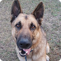 Adopt A Pet :: Titan - Dripping Springs, TX