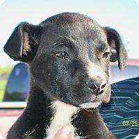 Adopt A Pet :: Domino - Mexia, TX