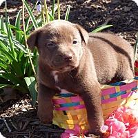 Adopt A Pet :: Aquarius - Raleigh, NC