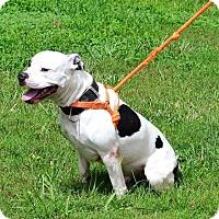Adopt A Pet :: Knox - Albemarle, NC