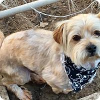 Adopt A Pet :: Grayson - McKinney, TX