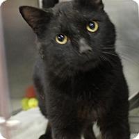Adopt A Pet :: Bob 35133371 - Westampton, NJ