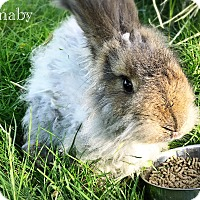 Adopt A Pet :: Barnaby - Portland, ME