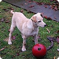 Adopt A Pet :: Cita - Vancouver, BC