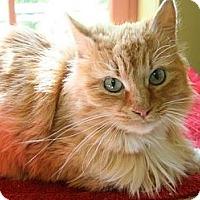 Adopt A Pet :: Tia - Hood River, OR