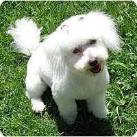 Adopt A Pet :: Krystal - ORANGE COUNTY, CA
