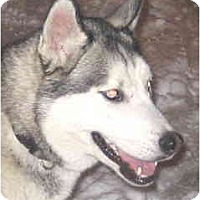 Adopt A Pet :: Denver - Kettle Falls, WA