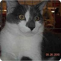 Adopt A Pet :: Jasper - Riverside, RI